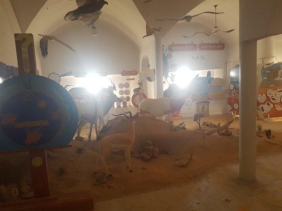 Durante a noite Tunísia Sahara Desert Safari por 4x4 de Douz: wild animals museum