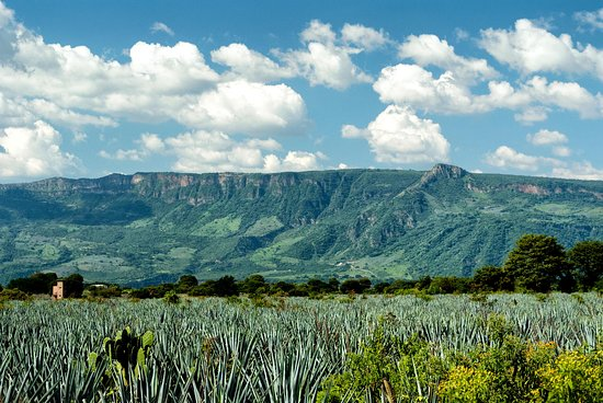 WideEyed Mexico