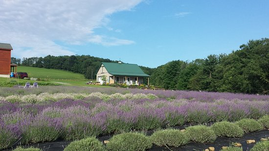 Deep Creek Lavender Farm