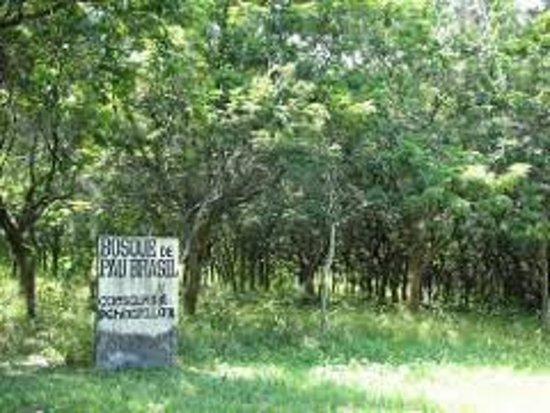 Bosque de Pau-Brasil