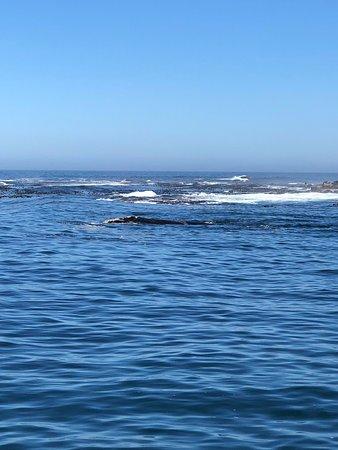 Seal Island: Baleia