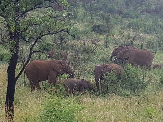 Midrand, Južna Afrika: ArthurG tours and transfers