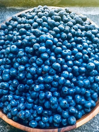 Holliston, MA: Patts blueberry bounty
