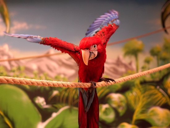 Papugarnia Mazurskie Tropiki
