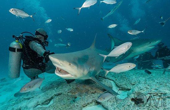 DM Diving