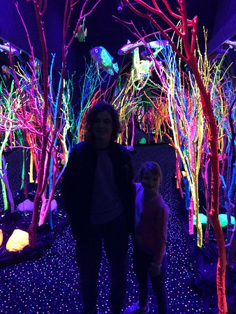 Meow wolf action shot