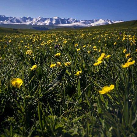 Xinjiang Uygur, Kina: wild flowers of narat grassland of xinjiang
