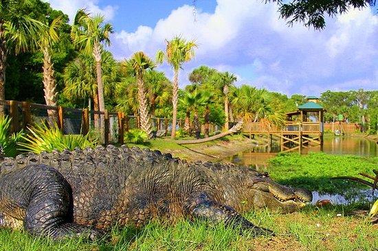 Esplora la Florida selvaggia da