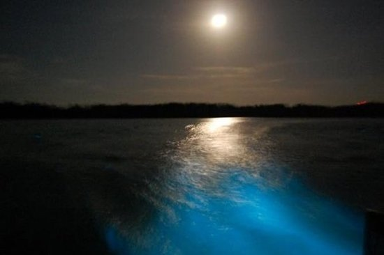 Luminous Lagoon Night Cruise i Jamaica