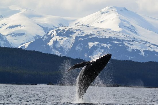 Escursione a bordo di Juneau