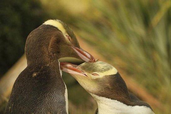 Dunedin y la vida silvestre de la...