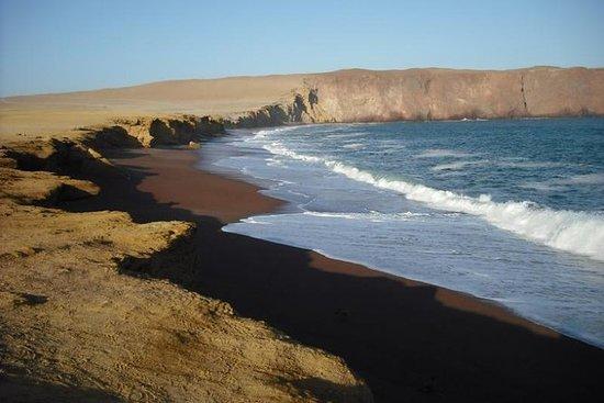 Ballestas Islands og Paracas National...