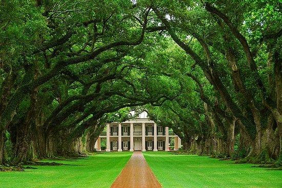 Visite de la plantation d'Oak Alley...