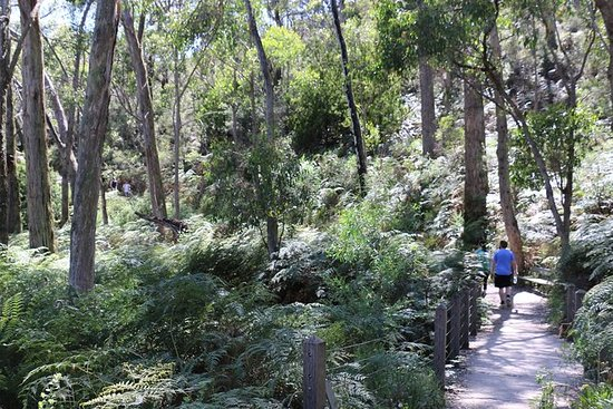 Self-Guided Waterfall Gully to Mount...