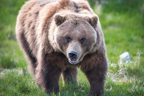 阿拉斯加野生动物之旅