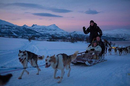 晚上赫斯基雪橇騎在特羅姆瑟