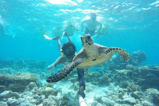 Maldivas experiencia local guiada de...