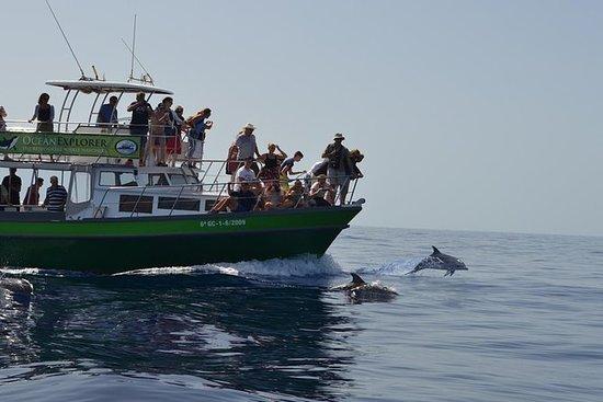3-timers Dolphin og Whale Watching av...