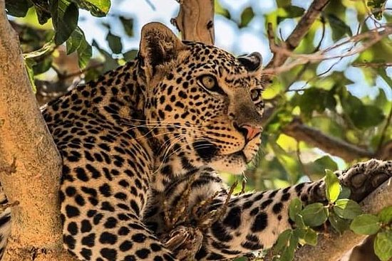 3 Days Visit Tanzania's Largest...