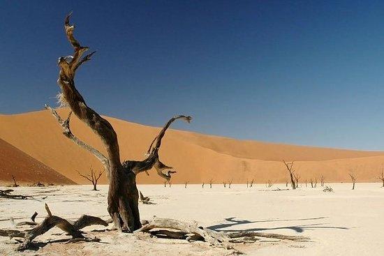 7 jours en voiture dans le désert, le...