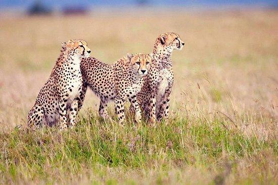 3 Days Camping Safari to Serengeti...