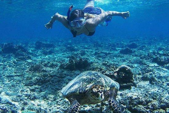 Excursion de plongée avec tuba dans...