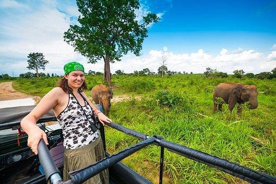 Wildlife Safari Udawalawa
