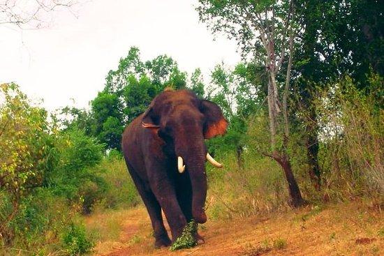 Tour de un día a Udawalawa Safari desde...