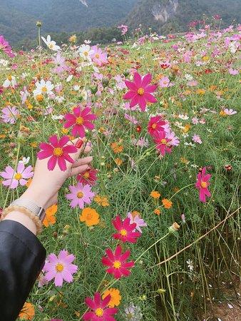 Tỉnh Nghệ An, Việt Nam: hoa hoa hoa :3:3:3:3 ngập tràn hoa.