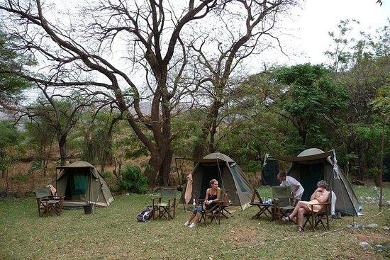 驚くべき北タンザニアサファリ8日間