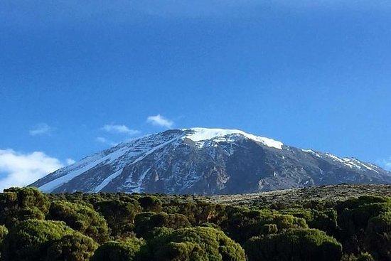 KIlimanjaro Klatring 5 dager Marangu...