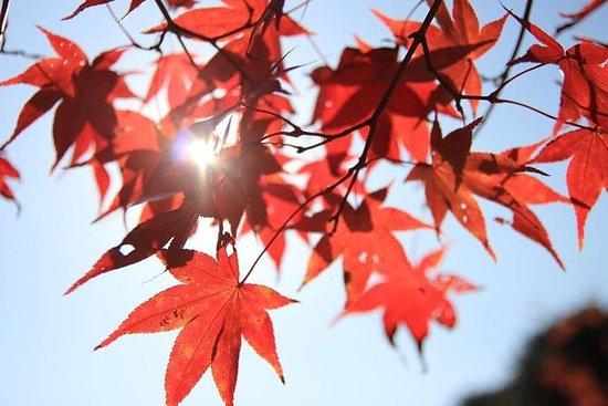 La belleza del follaje de otoño de...