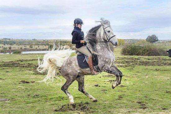 塞戈維亞騎馬和導遊城市之旅 - 來自馬德里的優質小團體