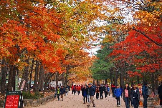 韓国の美しさ秋の紅葉11日10日