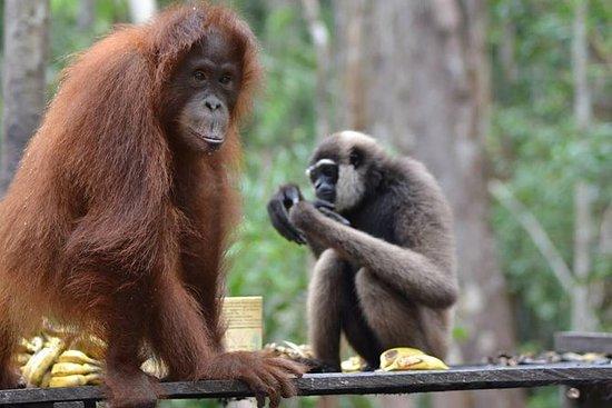Orangutan Share Trip 3D2N