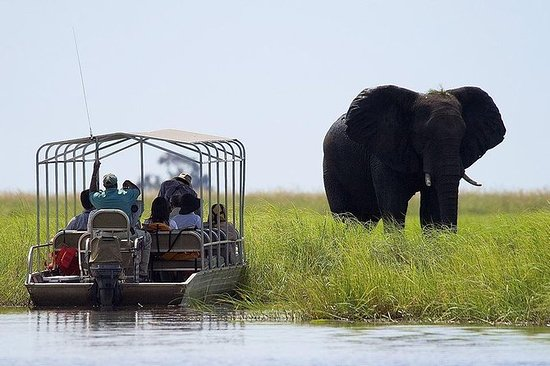Chobe Safari Full Day-tur