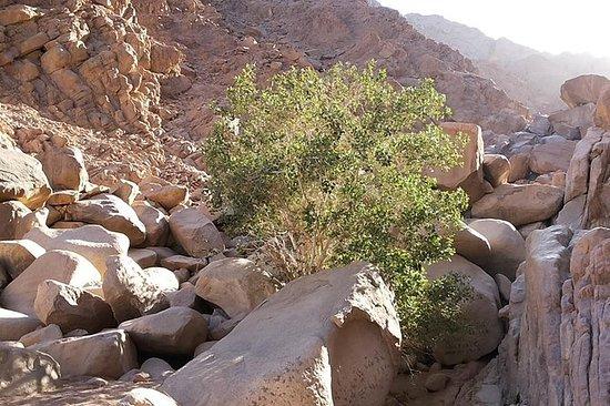 Om Dhalfa Safari tour from Hurghada