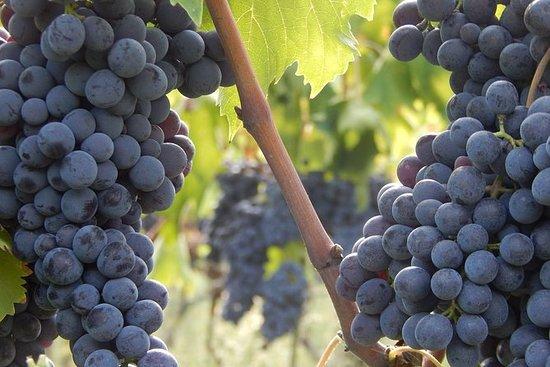 托斯卡納的Jeep Safari Chianti葡萄酒之旅...