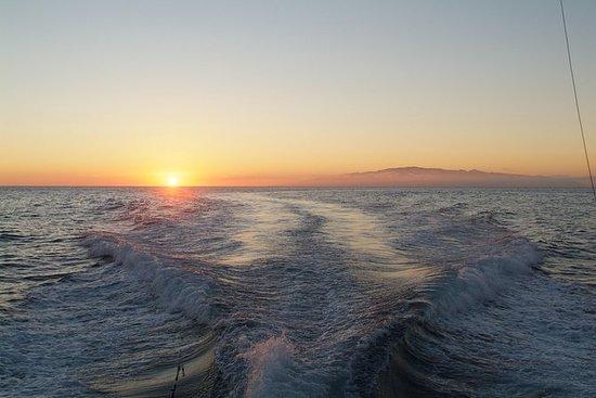 Wale und Delphine im Sonnenuntergang...
