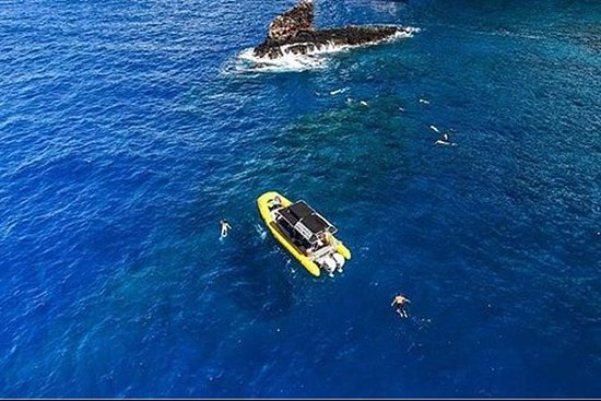 ec554266fa66e THE 10 BEST Maui Dolphin   Whale Watching Activities (with Photos ...