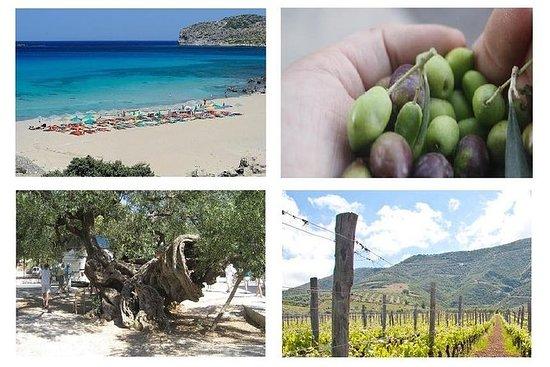 Vinho e Olive, Falasarna Beach Group...