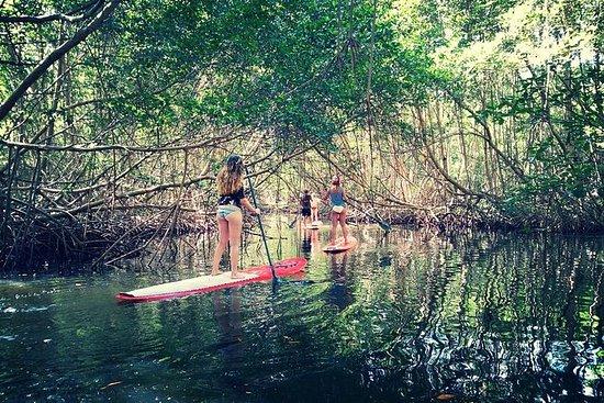 Randonnée Paddle Board Mangrove