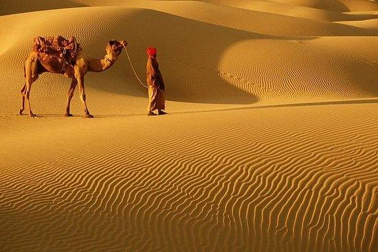 Cholistan Desert Camping