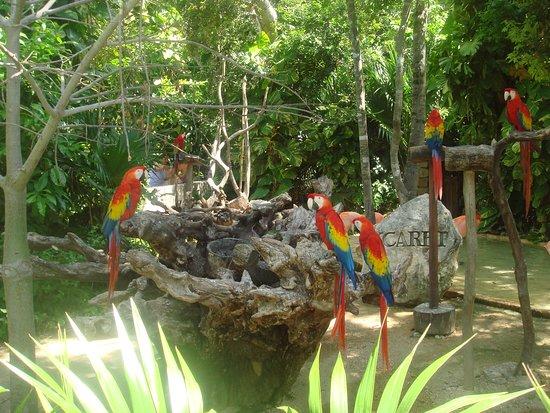 Playa del Carmen, Meksika: X-Caret