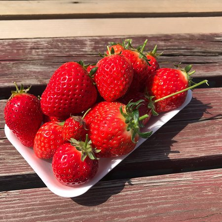 Yoshimura Strawberry Farm