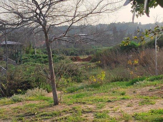 Ness Ziona, İsrail: פארק גבעת התור