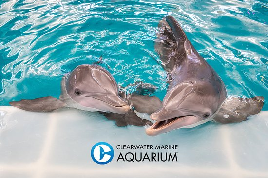 Clearwater Marine Aquarium - 2020 All You Need to Know ... on eckerd college map, coral springs fl map, miami seaquarium map, downtown clearwater map, fort de soto park map, mystic aquarium map, discovery cove map, jacksonville zoo and gardens map, palm beach zoo map, university of tampa map, shedd aquarium chicago map, sand key beach map, tampa convention center map, tampa general hospital map, busch gardens map, st. pete clearwater map, raymond james stadium map, tarpon springs sponge docks map, national aquarium in baltimore map, cypress gardens map,