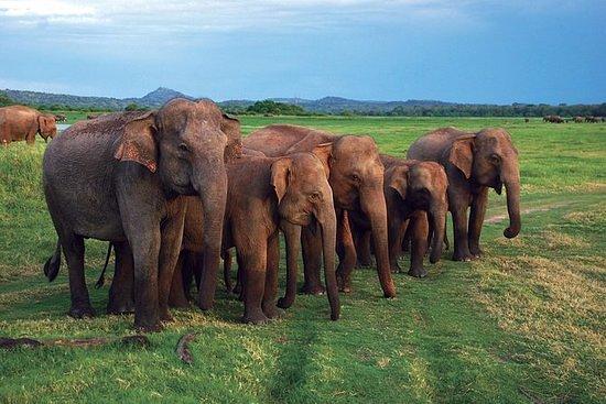 Colombo, Sri Lanka: udawalawa national park safari