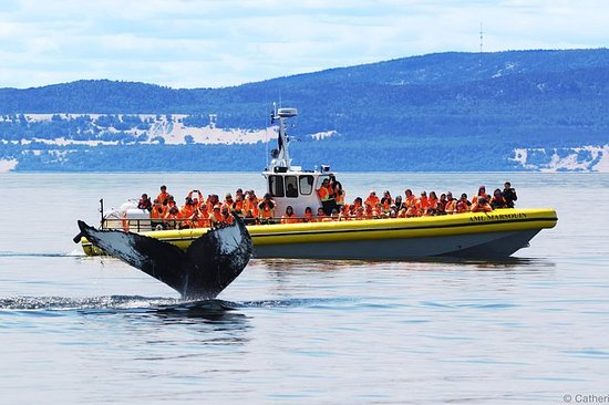 Full-Day Whale Watching Cruise fra...