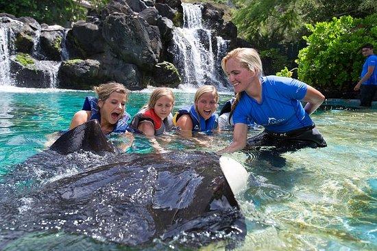 夏威夷海洋生物公园夏威夷珊瑚礁和雷遭遇